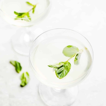 Mint Gimlet Cocktail
